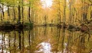 温身平 温身の池2