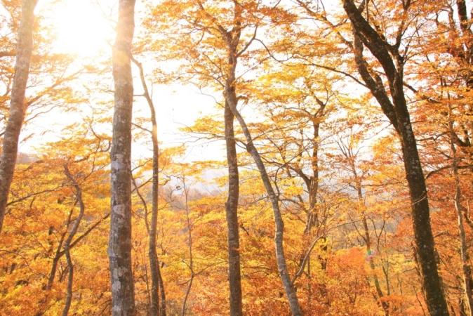白い森まるごと塾 vol.11『ブランディングのためのPDCAサイクル』を開催します。