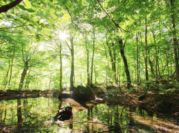 森林セラピー基地「温身平」